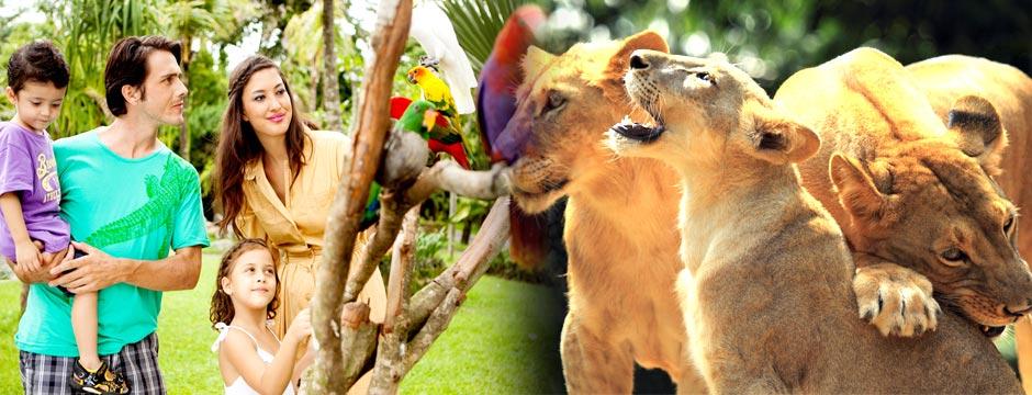 act-bali-zoo