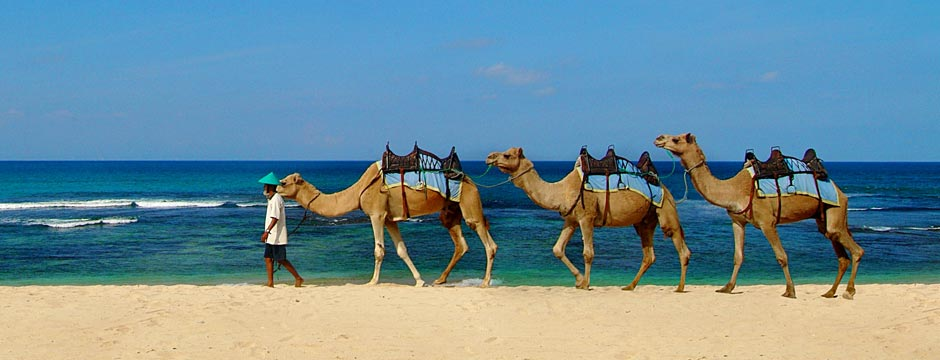 act-camel-safari