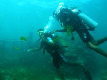 バリ島 5in1パッケージランチ 体験ダイビング
