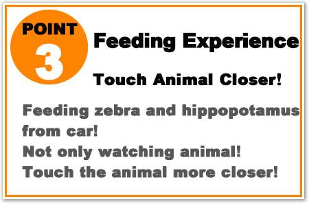 Feeding zebra and hippopotamus from car! More closer to animal!
