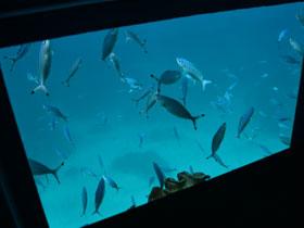 セミ潜水艦