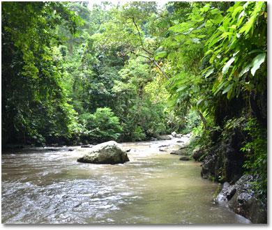 バリ島 アユン川の景色