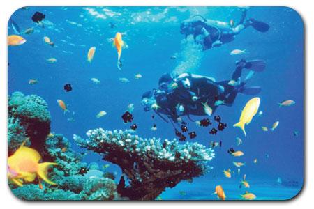 バリ島 ダイビング 写真