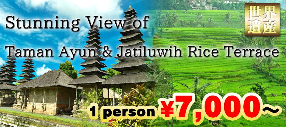 Bali World Heritage Tour Taman Ayun & Rice Terrace! Visit Taman Ayun Temple and Jatiluwih rice terrace! 1 person \7,000~