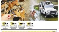 バリサファリ & マリンパーク探検 バリトレイル 特集を公開しました!通常バリサファリではシマウマ柄のバスに乗ってサファリ探検を行いますが、バリトレイルではワイルドな4X4ジープでサファリ探検を楽しみます! 日...