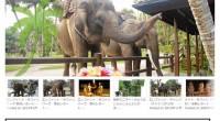 【SPページ】バリの象さんと触れ合おう!エレファント特集 公開!バリ島でファミリーやカップルに人気のエレファントメニュー! バリ島には象さんと触れ合えるエレファント・パークが3か所あるんです!!!各エレファントパークのご...
