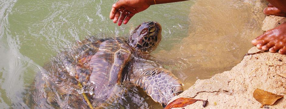 hg-mar-turtle-island