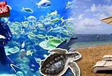 バリ島 観光S/R Nusa Dua de Marine 5in1