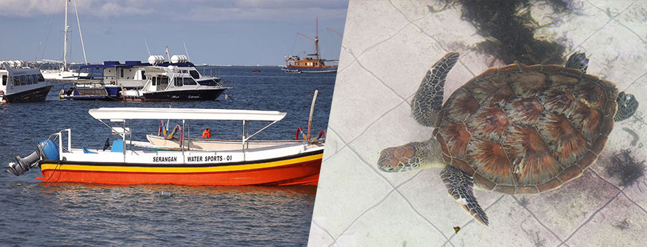 top-mar-turtle-boat