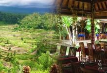 バリ島 観光Stunning View Rice Terrace! Mahagiri Restaurant