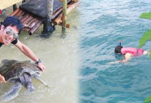 バリ島 観光Outdoor education turtle island and snorkel BALI CORAL