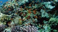 バリ島は、四国の高知県とほぼ同じ面積の小さな島。 そんな小さな島バリ島の周辺には、ダイビングポイントがいっぱい!! 幻想的なサンゴの上をひらひらと舞う熱帯魚は、見ているだけで癒されますよね☆ また、いくつものダイビングポ...