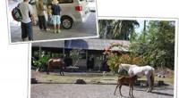 バリ島で乗馬体験 体験日:2011年9月1日 体験者:Soma、Rui、ママ&パパ 年代:ファミリー 渡バリ:10回目     パパさん「バリ島には10回以上来ている私たち...