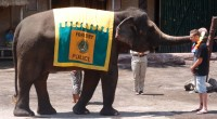 2014年8月30日。今回はバリサファリ & マリンパークのスタッフによる動物との記念撮影(フォトフレーム付き1枚)とアニマルショー、エレファントショーへ、バリトレイル(BALI TRAILS 4X4)のオプショ...