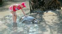 ヒロチャン新メニューの「お子様無料!亀の島とシュノーケル体験」は、お子様がいる家族にぴったりのメニューになっています。 日本ではなかなか触れ合えない動物たちと触れ合うことが出来る亀の島、 実際の海で暮らして...