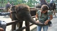 2013年3月29日「象の楽園」Elephant Safari Park に行ってきました。 Elephant Safari Park は3.5ヘクタールの敷地の大自然の中で、現在31頭の象が暮らしています。 ちょうど、...