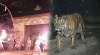 2015年8月4日。夜の動物園を探険できるバリ動物園のナイトズーツアーの取材へ行ってきました! バリ島内の動物園でナイトズーが体験できる場所はサファリ&マリンパークがありますが、どちらも特色があり工夫が施されてい...