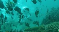 2009年6月20日、クラブアクア社のシーウォーカーを体験してきました!こちらは酸素で満たされたヘルメットをかぶって、サヌール沖の美しい海底を散策するマリンスポーツ。地 上と同じように息ができるので、ダイビング経験が無く...