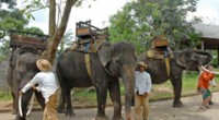 2010年11月22日。 1年半ぶりに エレファント・キャンプ にやってきました!ここは18頭のスマトラ象が暮らす象の公園。 タロ村にあるもう一つのエレファント・パークと並ぶ2大象パークです。 今回も前回と同じ 『エレフ...