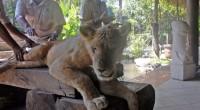 """2010年4月29日、バリ島ウブドの手前にある『バリ動物園』に行ってきました! バリ島で動物と触れ合う場所といえば、""""サファリ&マリンパーク"""" が不動の人気を誇っておりますが、バリ動物園にはまた違った良さがあるんです。テ..."""
