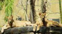 2010年6月26日、バリ島ウブドの手前にある『バリ動物園』にスタッフ4名で行ってきました! 私、今まではバリ島に来てまで動物園に行かなくてもって思っていたんです(苦笑)バリ動物園のハデな車は、気になってましたが****...