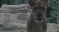 2012年8月22日、今日はバリ動物園の取材へ出発!朝から夜までのフル取材。園内散策のほかにエレファントライド、ツリートップ、ライオンレストランでハイティー、ナイトズーを体験!取材の最後を締めくくる、バリズーナイト!!バ...