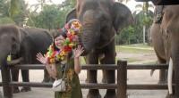 2012年11月2日、バリ島ウブドの北に位置するエレファント・サファリパークへ行ってきました♪その名の通り、ここにはインドネシアのスマトラ島からやってきた象たちがたくさん!!昼とはちょっと違ったナイトサファリを楽しんでき...