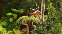 2012年8月22日、今日はバリ動物園の取材へ出発!朝から夜までのフル取材。園内散策のほかにエレファントライド、ツリートップ、ライオンレストランでハイティー、ナイトズーを体験!バリ動物園をたっぷりご紹介します! 出発~!...