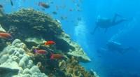 2013年4月30日、ダイブダイブダイブバリでファンダイビングを体験してきました!行先はサヌール沖の離島、ヌサペニダ。バリ島周辺に数あるダイビングポイントの中でも、特に澄み切った海とたくさんの珊瑚礁、熱帯魚が見られると人...