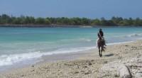 2015年8月14日。バリ島サヌールエリアのスランガン島にあるスランガンサーフィン社、ホースライディングの取材へ行ってきました。 今回で2回目となるホースライディングの取材。前回で馬の魅力にはまってしまった私は今回も馬と...