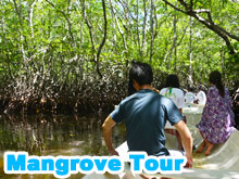 Mangrove adventure(45min) by rowboat or sea kayak or SUP