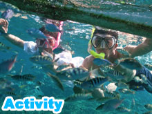 Activity (snorkeling or marine walk or spa or experience dive)